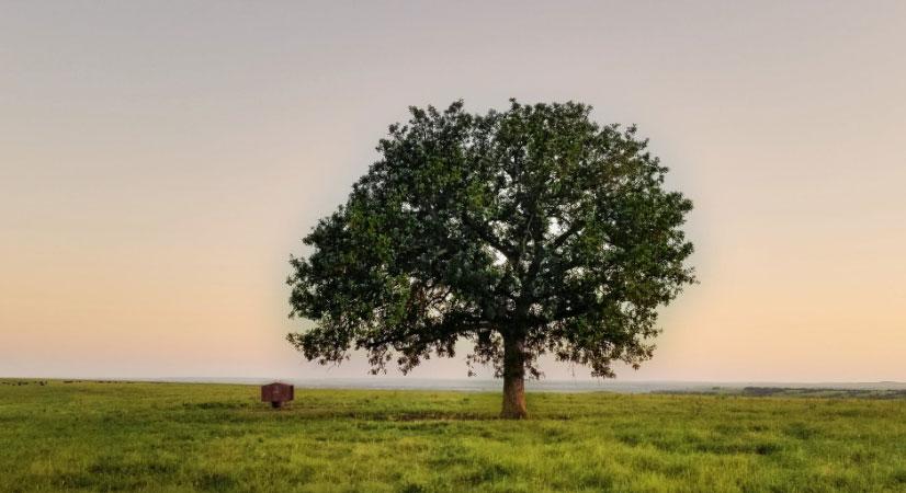 肩负重担 推动我国经济、社会<br>环境全面协调可持续发展