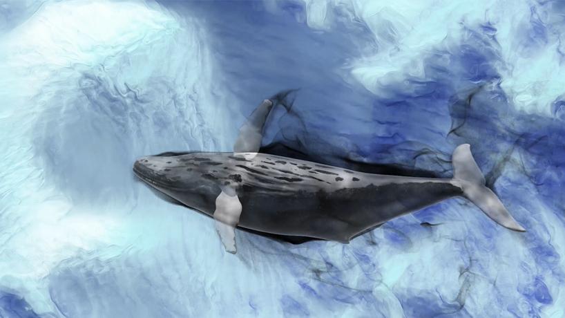 鲸出雄安,鲲腾千年<br>雄安绿色城市展宣传视频
